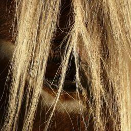 Oeil cheval. Coaching facilité par le Cheval AGP Coaching