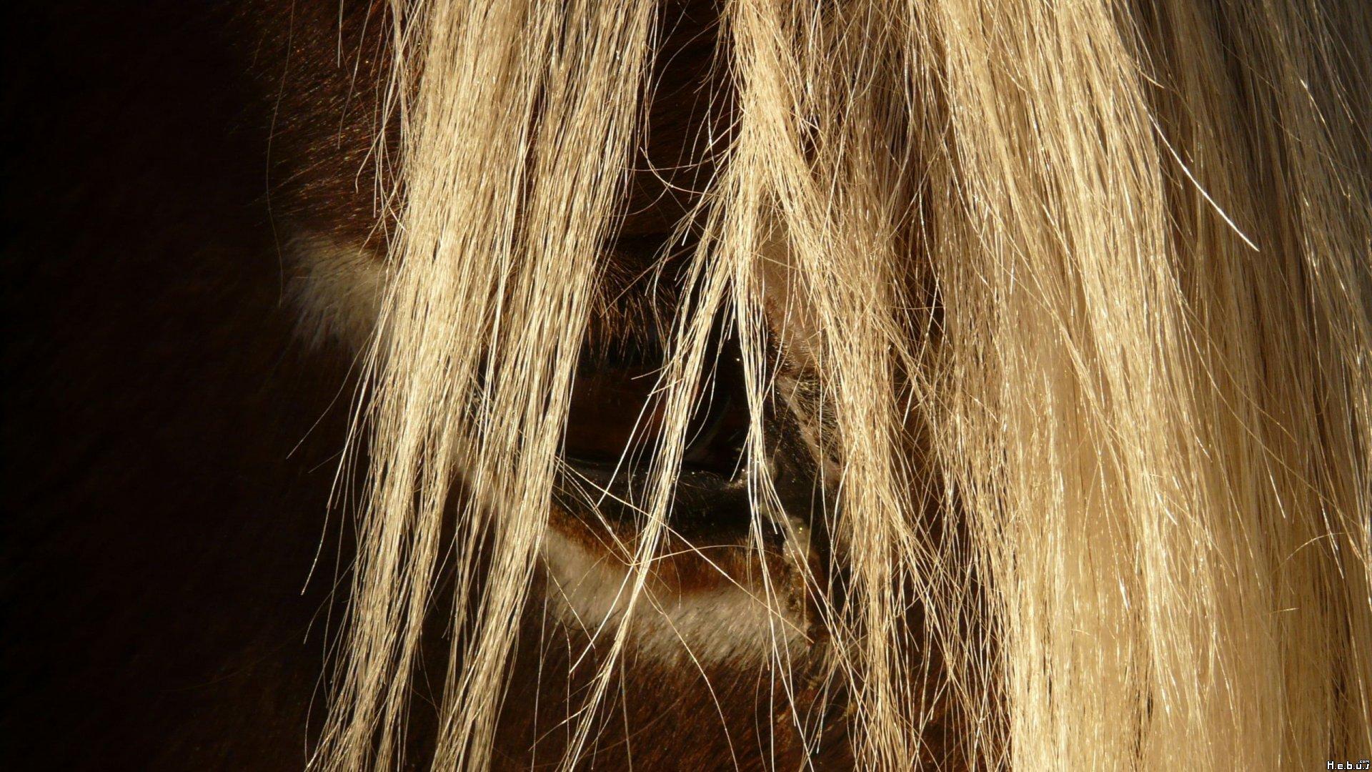La recherche d'emploi et le vieux cheval : Une métaphore qui vaut le détour !