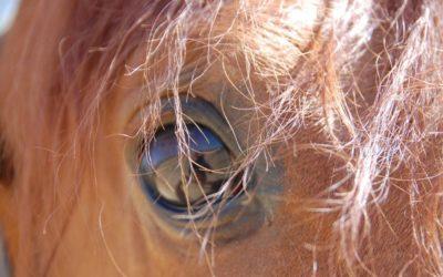 L'art de la relation : pleine conscience et communication avec les chevaux